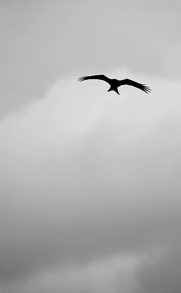 B+W Red Kite