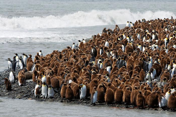 Volunteer Point Falkland Islands Tours