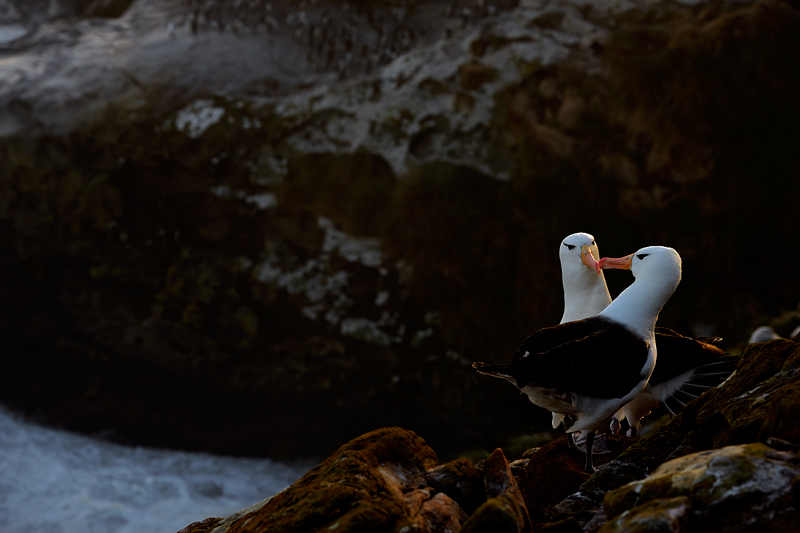 Craig Jones Wildlife Photography http://www.islandholidays.co.uk/holidays/south-atlantic/falklands-photography.aspx