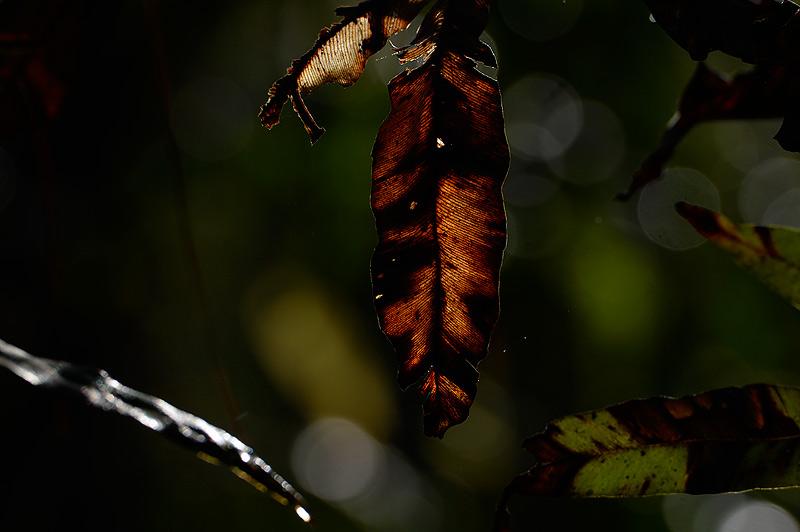 https://www.craigjoneswildlifephotography.co.uk/