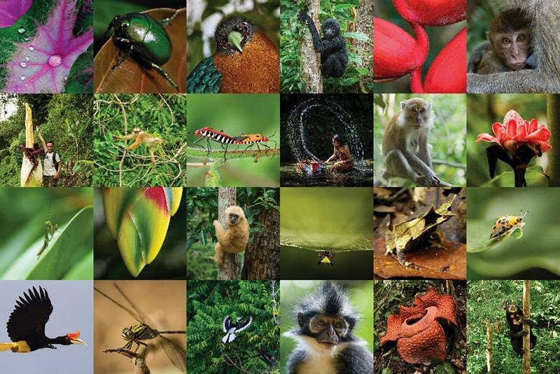 http://orangutans-sos.org/spotlightsumatra/art_sale