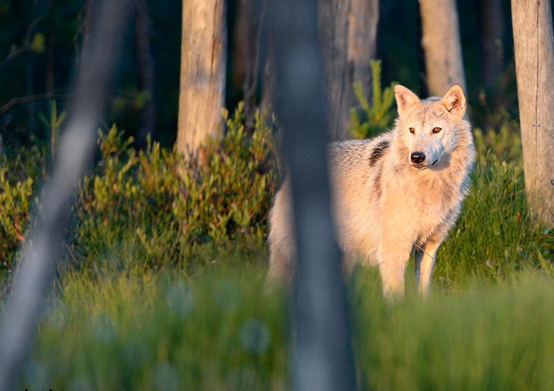 Craig Jones Wildlife Phohotgraphy