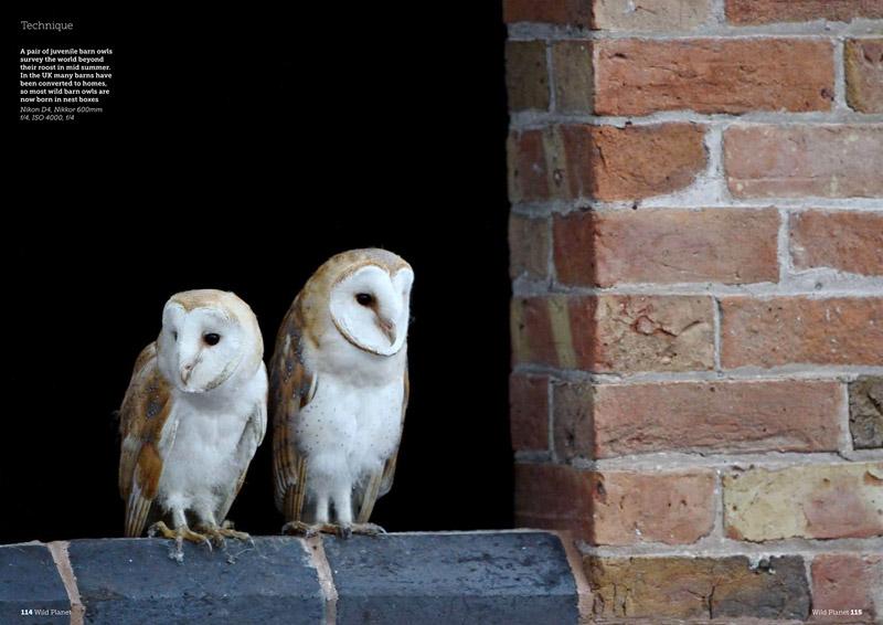 http://www.craigjoneswildlifephotography.co.uk/