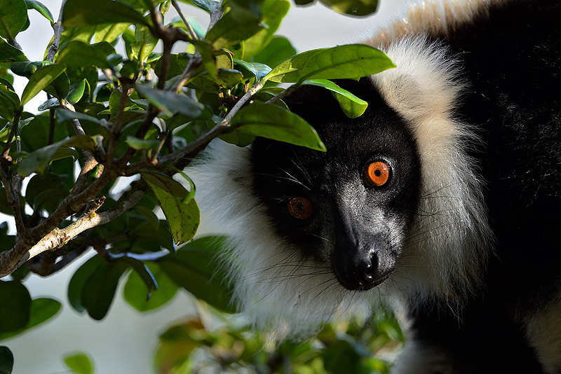 https://www.craigjoneswildlifephotography.co.uk/workshops/madagascar-photography-holiday.php