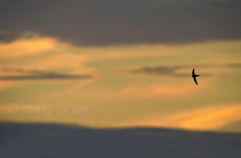 Craig Jones Wildlife Photogrpahy