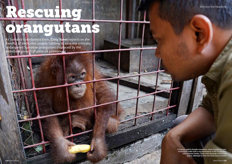 http://wildplanetphotomagazine.com/2015/rescuing-orangutans/