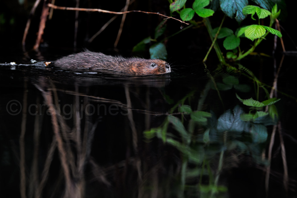 https://www.craigjoneswildlifephotography.co.uk/conservation