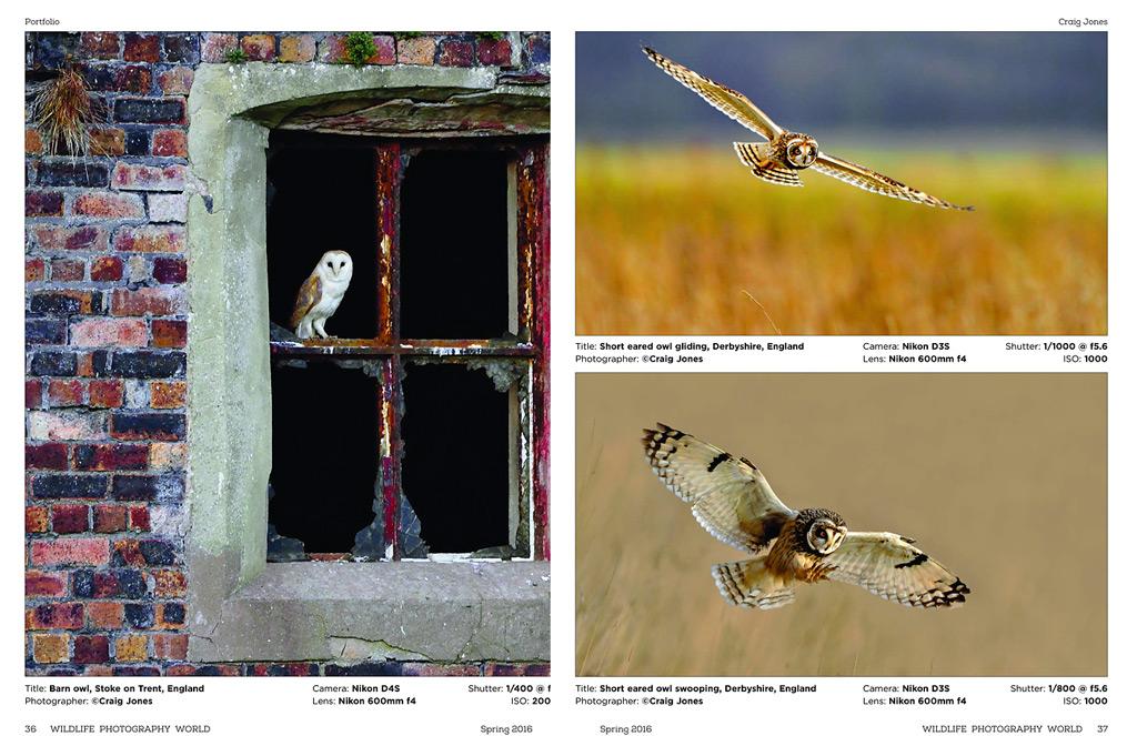 Craig Jones Wildlife Photography - Wildlife Photography World