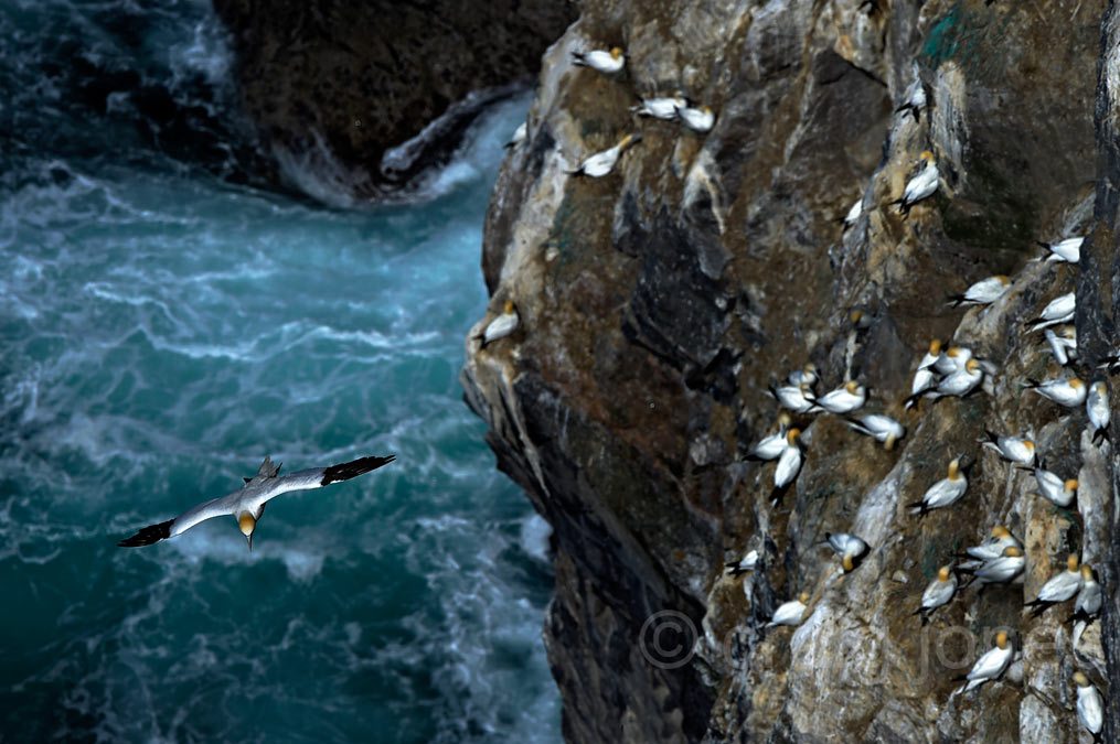 https://blog.craigjoneswildlifephotography.co.uk/workshops/shetland-diaries-2016/20160612466/