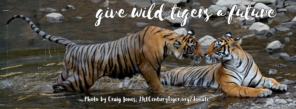 http://www.21stcenturytiger.org/