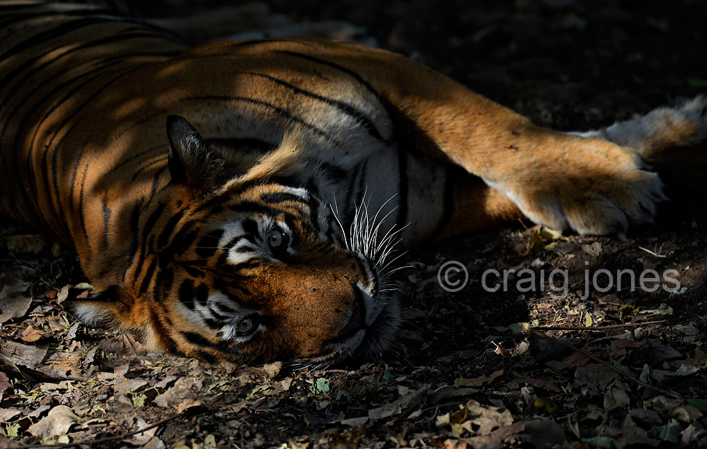 Craig Jones Wildlife Photography