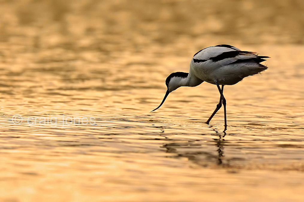 Wildlife Photography Blog - Craig Jones Wildlife Photographer