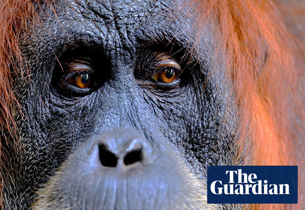 https://www.theguardian.com/environment/gallery/2020/apr/21/new-big-5-wildlife-photography-project-in-pictures