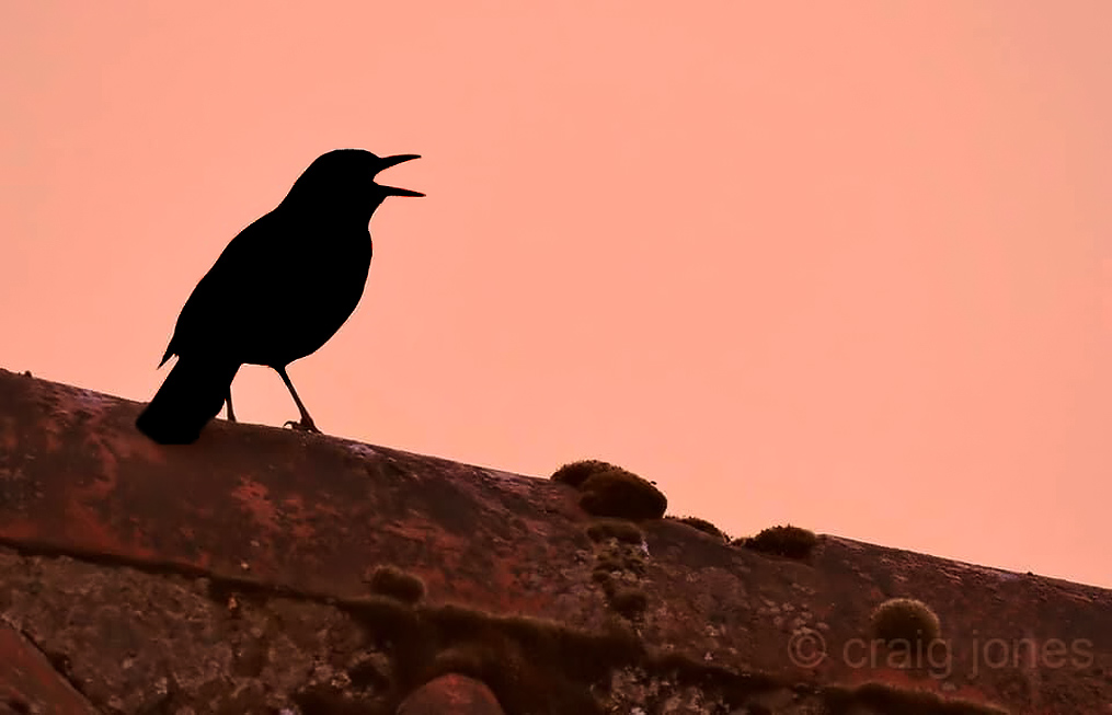 Craig Jones Wildlife Photography Dawn Chorus Day 2020