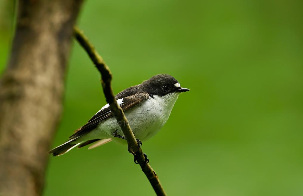 Craig Jones Wildlife Photography
