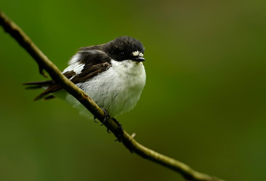 Craig Jones Wildlife Photograph
