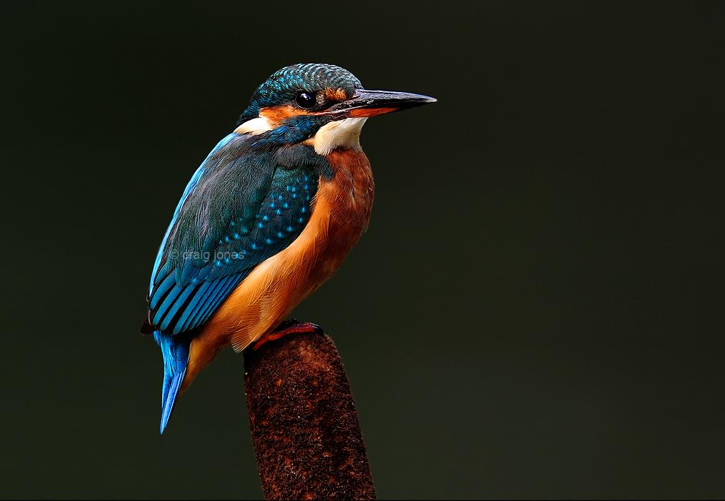 Craig Jones Wildlife Photography Mental Heath Awareness Week