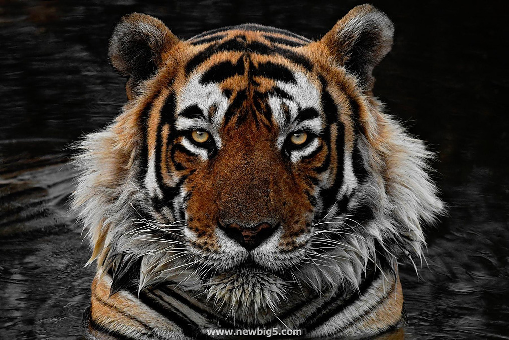 New Big 5 Craig Jones Wildlife Photography